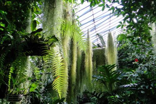 Оранжерея. Ботанический сад Эдинбурга.
