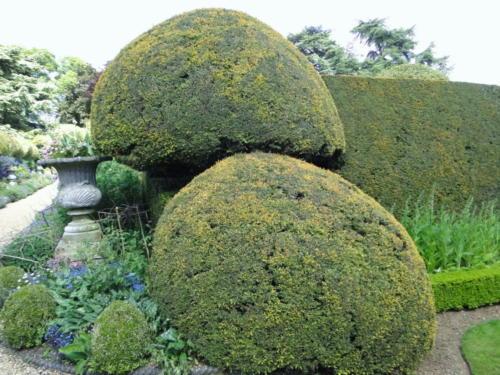 Ascott garden 10