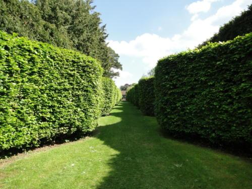 Ascott garden 28